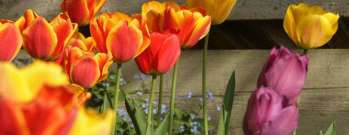 Frühlingskulisse